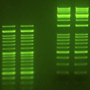 SmartGlow Safe Nucleic Acid Stain SmartGlow PS SmartGlow LD E4500-PS E4500-LD
